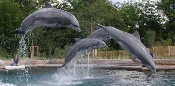 Show delfínov a ZOO v Norimbergu