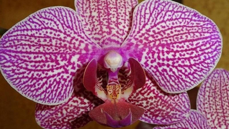 Výstava orchideí Klosterneuburg a kláštor