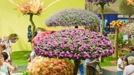 Výstava kvetov Tulln