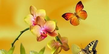 Výstava orchideí a prehliadka Viedne