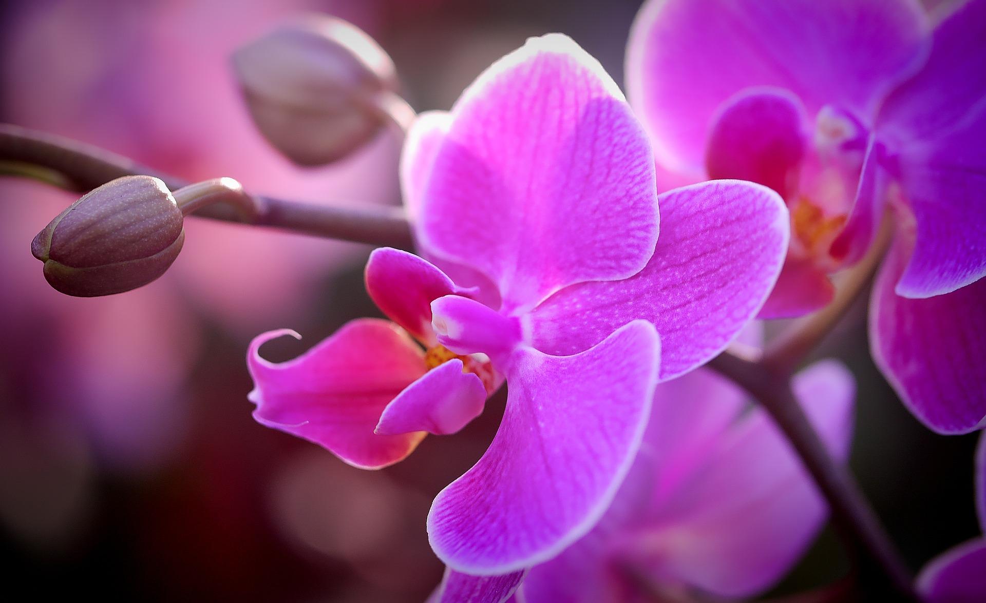 https://cestovnakancelariadaka.sk/files/product/orchid-3029574_1920.jpg