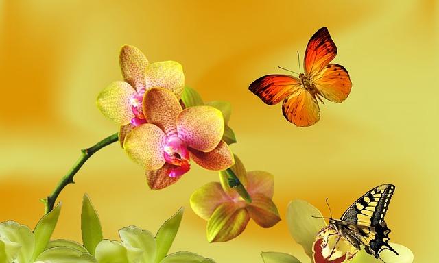https://cestovnakancelariadaka.sk/files/product/yellow-orchid-866668_6401.jpg